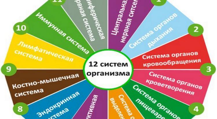 12 систем организма