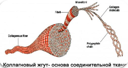 средство для выведения жидкости из суставов