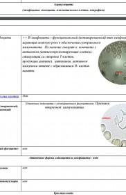 Gemoskanirovanie-protokol-zakluchenija—