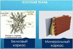 Костный белковый матрикс играет роль поддержки и связи между кальцием, фосфором и другими минералами.