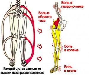 Стопа и позвоночник- единая биомеханическая система.