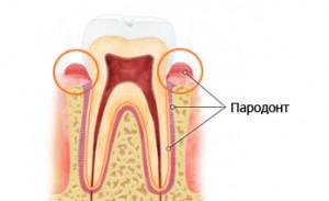 Пародонт- окружающие зуб ткани