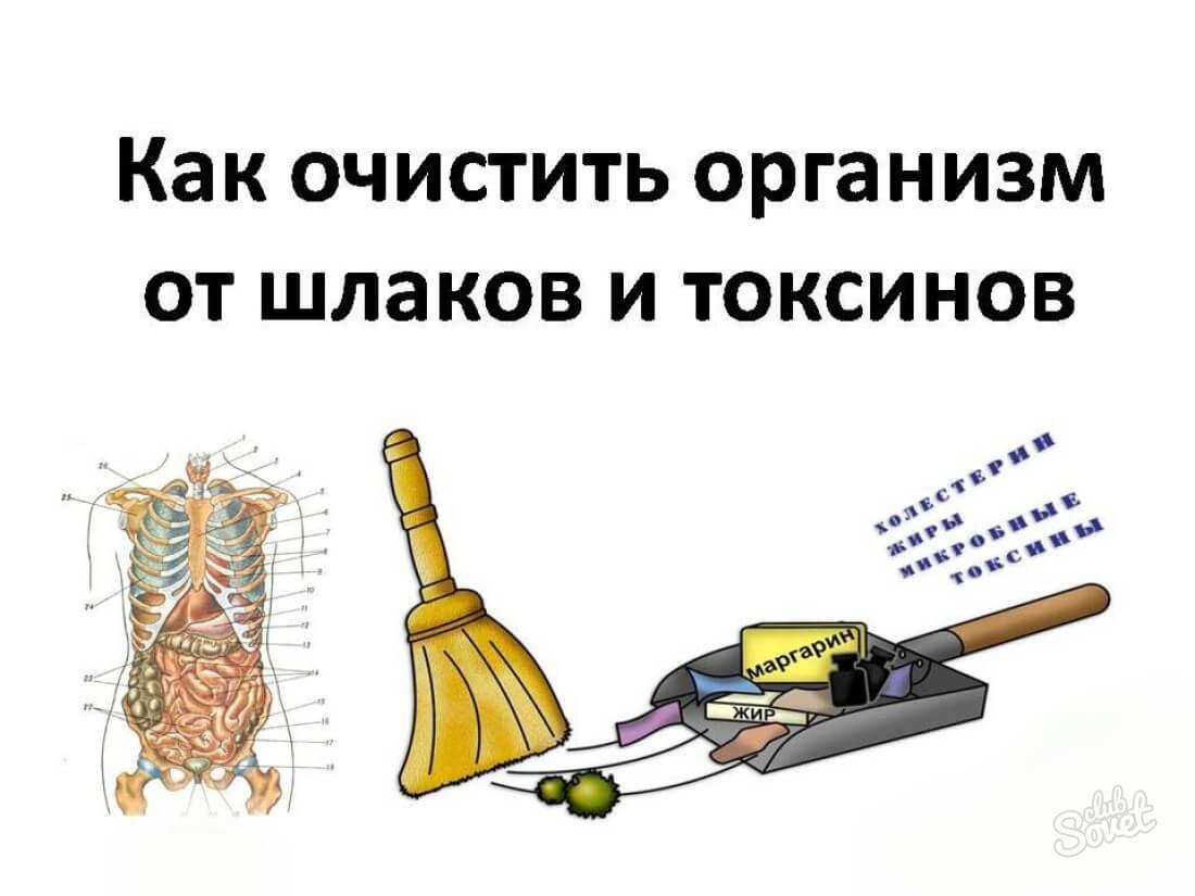 методы чистки организма от паразитов