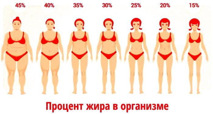 procent-zira-v-organizme